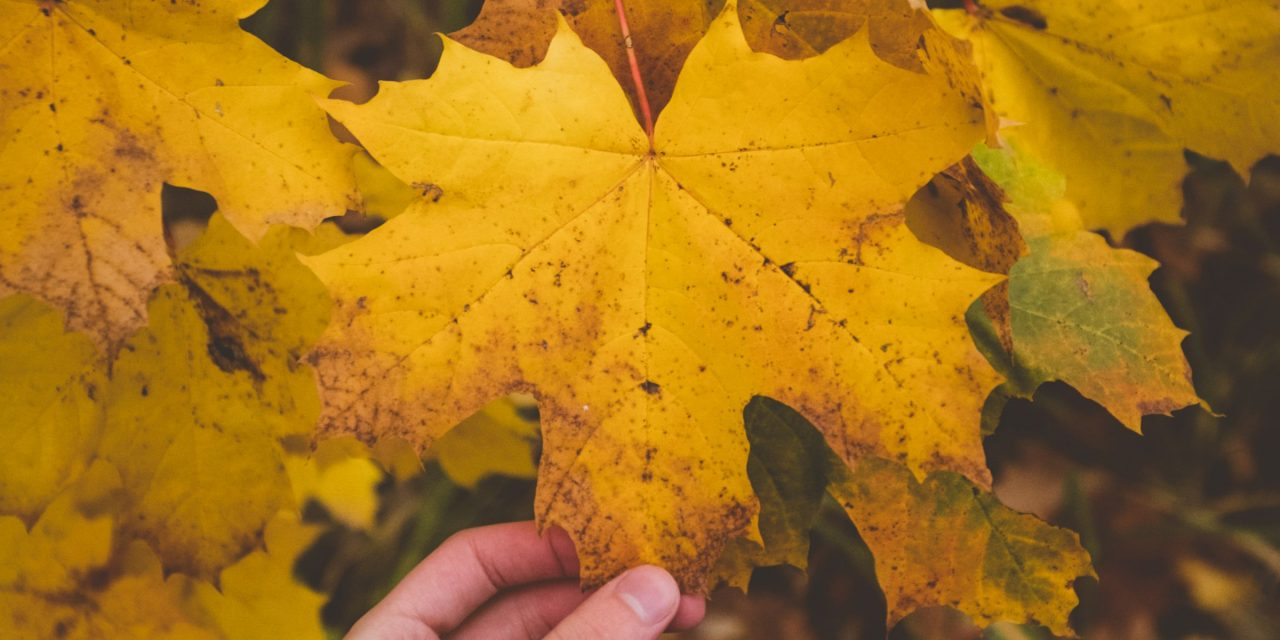 Research Shows Maple Leaf Extract Could Stop Wrinkles