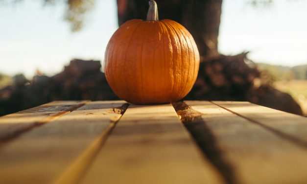 Enhance Your Skincare Routine with the Power of Pumpkin
