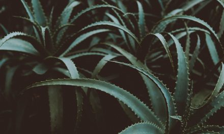 Give Dry Skin the Boot with the Help of Indoor Plants