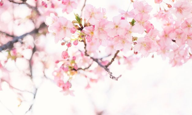 Cherry Blossom Symbolism and How To Incorporate Them Into Your Next Tattoo